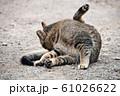 昼下がりの猫 61026622