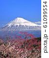 梅と富士山-222941 61099554