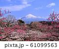 梅と富士山-222989 61099563