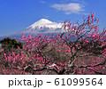 岩本山公園からの風景-222990 61099564
