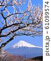 白梅と富士山-223051 61099574