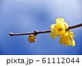 ろうばい(蝋梅) 61112044