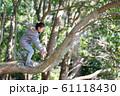 木登りをする女の子 61118430