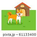犬小屋と柴犬 61133400