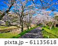 法勝寺川土手の桜並木 61135618