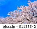番原公園の桜 61135642