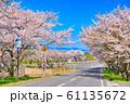 大山町豊房の桜並木 61135672