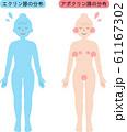 アポクリン汗腺とエクリン汗腺の分布 61167302