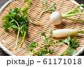 春の七草 61171018