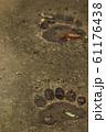 熊の足跡 61176438