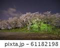 夜桜 花見 61182198