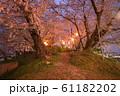 夜桜 花見 61182202