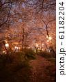夜桜 花見 61182204