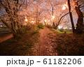 夜桜 花見 61182206