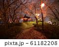 夜桜 花見 61182208