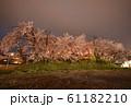 夜桜 花見 61182210