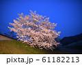 夜桜 花見 61182213
