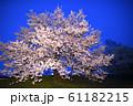 夜桜 花見 61182215