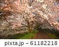 夜桜 花見 61182218