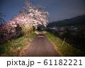夜桜 花見 61182221