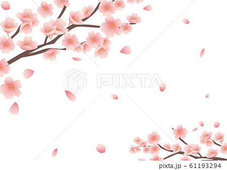 桜の花の背景素材 61193294