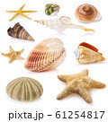 Large set of different sea shells isolated on a white background. Stacked photo 61254817