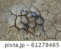 Texture of dry desert, background 61278465