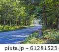緑の多い山間の道 61281523