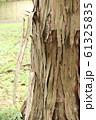 剥がれ落ちる大木の皮 61325835