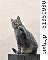 近所の野良猫 61350930