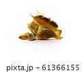 Group of seashells isolated on white background 61366155