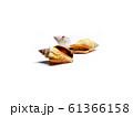 Group of seashells isolated on white background 61366158