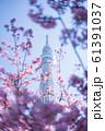 東京スカイツリーと河津桜 青空 縦構図 61391037