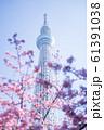 東京スカイツリーと河津桜 青空 縦構図 61391038