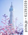 東京スカイツリーと河津桜 青空 縦構図 61391039