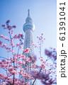 東京スカイツリーと河津桜 青空 縦構図 61391041