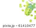 ぶどう マスカット 61410477