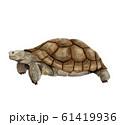 リクガメ 61419936