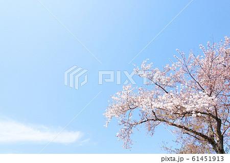 春爛漫 華やぐ春 春の詩 桜の花 61451913