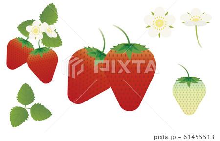 イチゴ 花 苺 セット 61455513