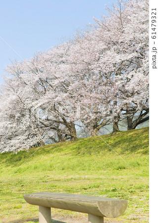 桜 61479321