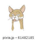 フレーメン状態の猫 61482185
