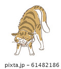 怒った猫 61482186