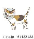カラーをつけた猫 61482188