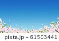 桜(背景素材) 61503441