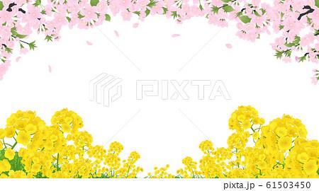 菜の花と桜 61503450