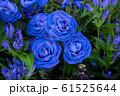 青いバラ 61525644