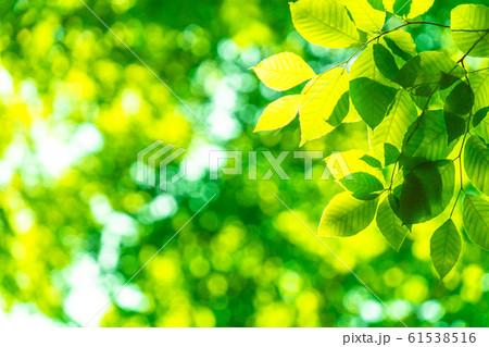 新緑・エコイメージ 61538516