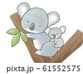 コアラの親子 61552575