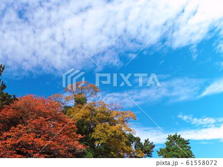 紅葉と青空と雲 61558072